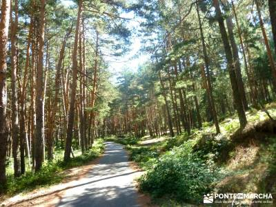 Loma del Noruego; Pinares Valsaín; viajes senderismo;viajes de montaña;senderismo organizado